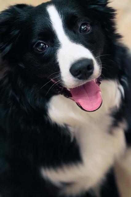 dog-544736_640