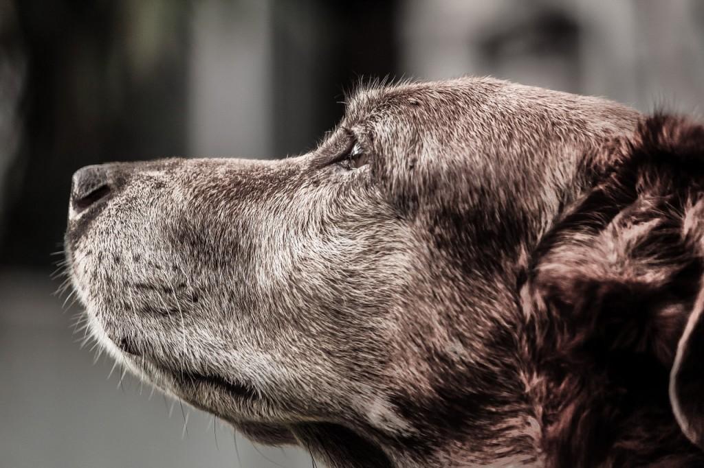 dog-916099_1280