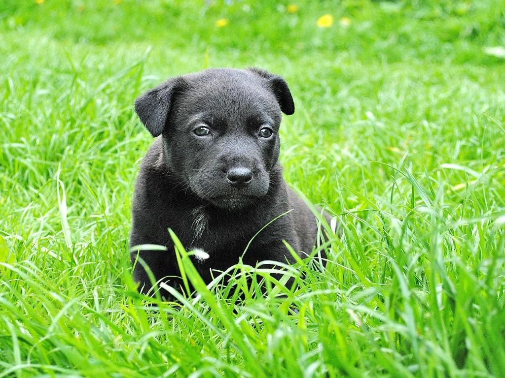 dog-279698_1280